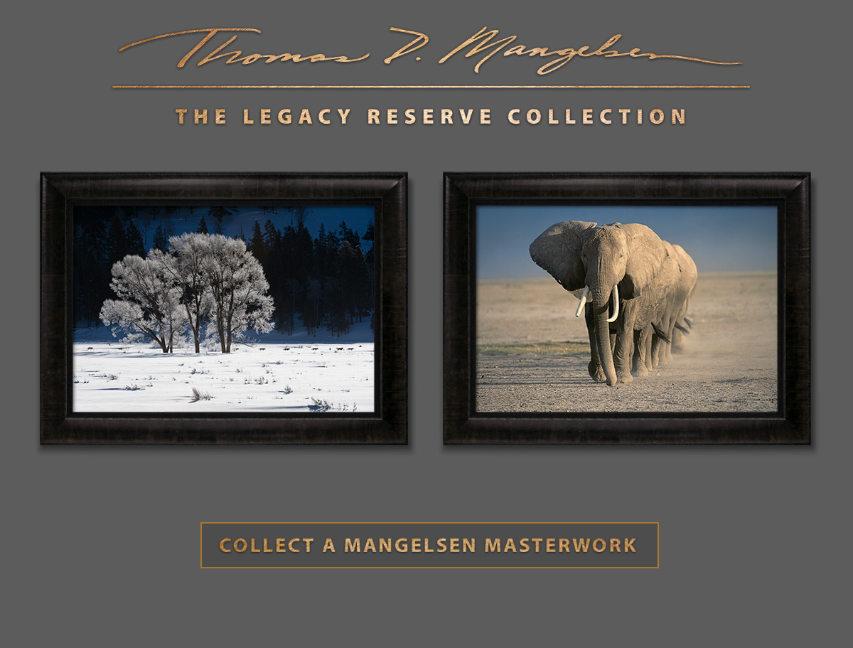 The Legacy Reserve Collection of Masterworks by Thomas D. Mangelsen