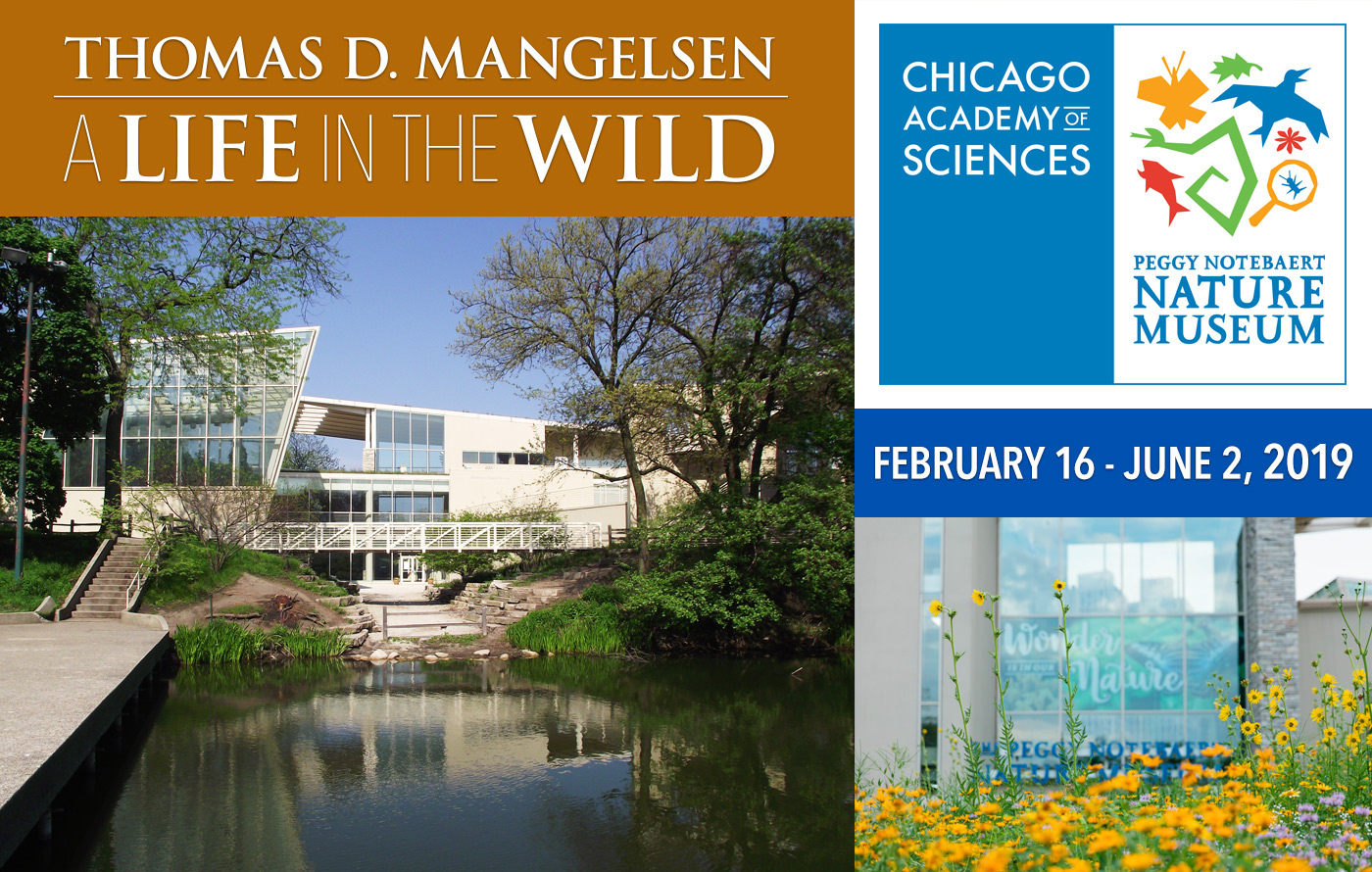 A Life in the Wild exhibition opens in Chicago