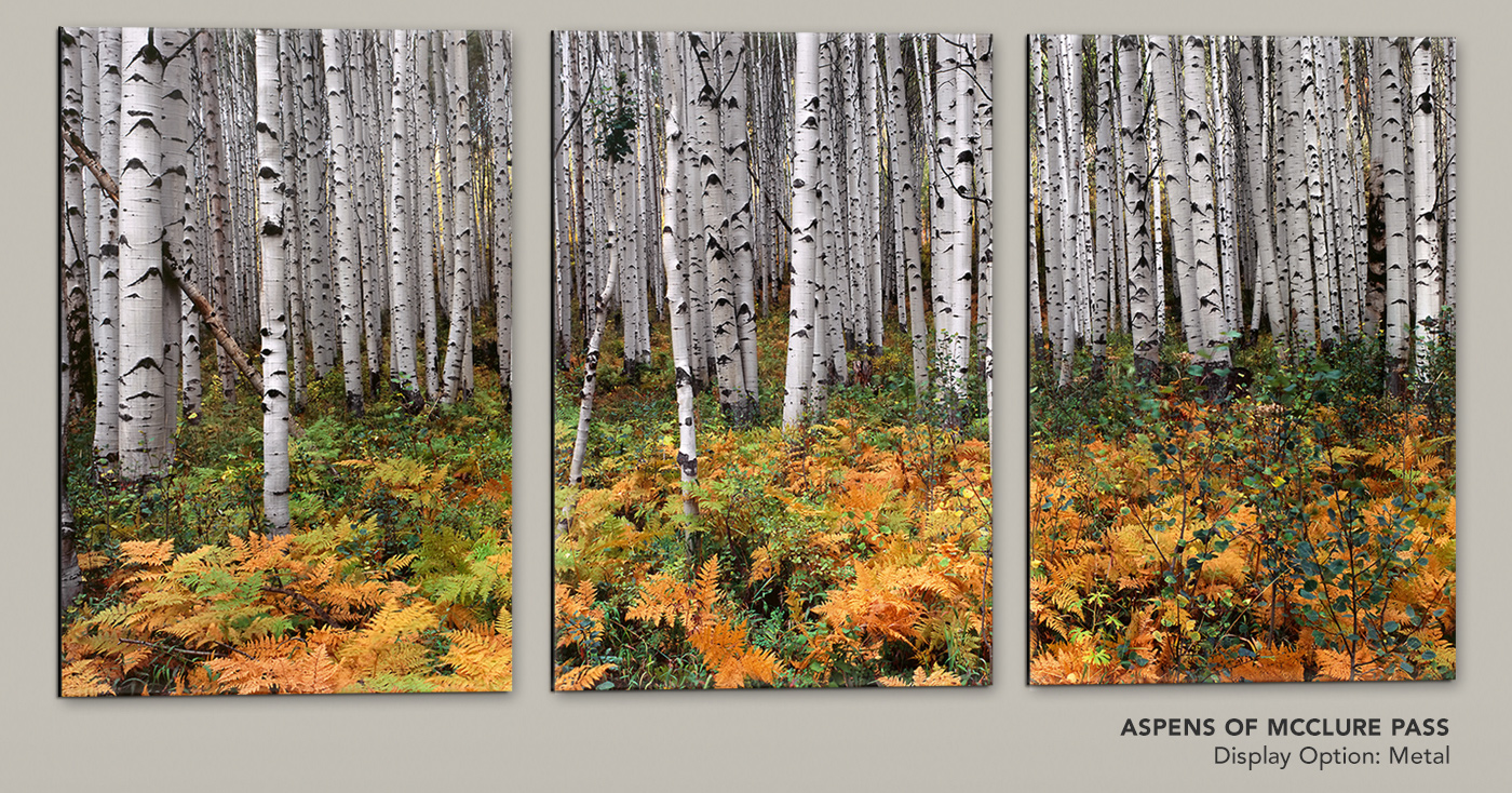 Introducing a new release limited edition portraying the aspens of McClure Pass in Gunnison National Forest of Colorado.