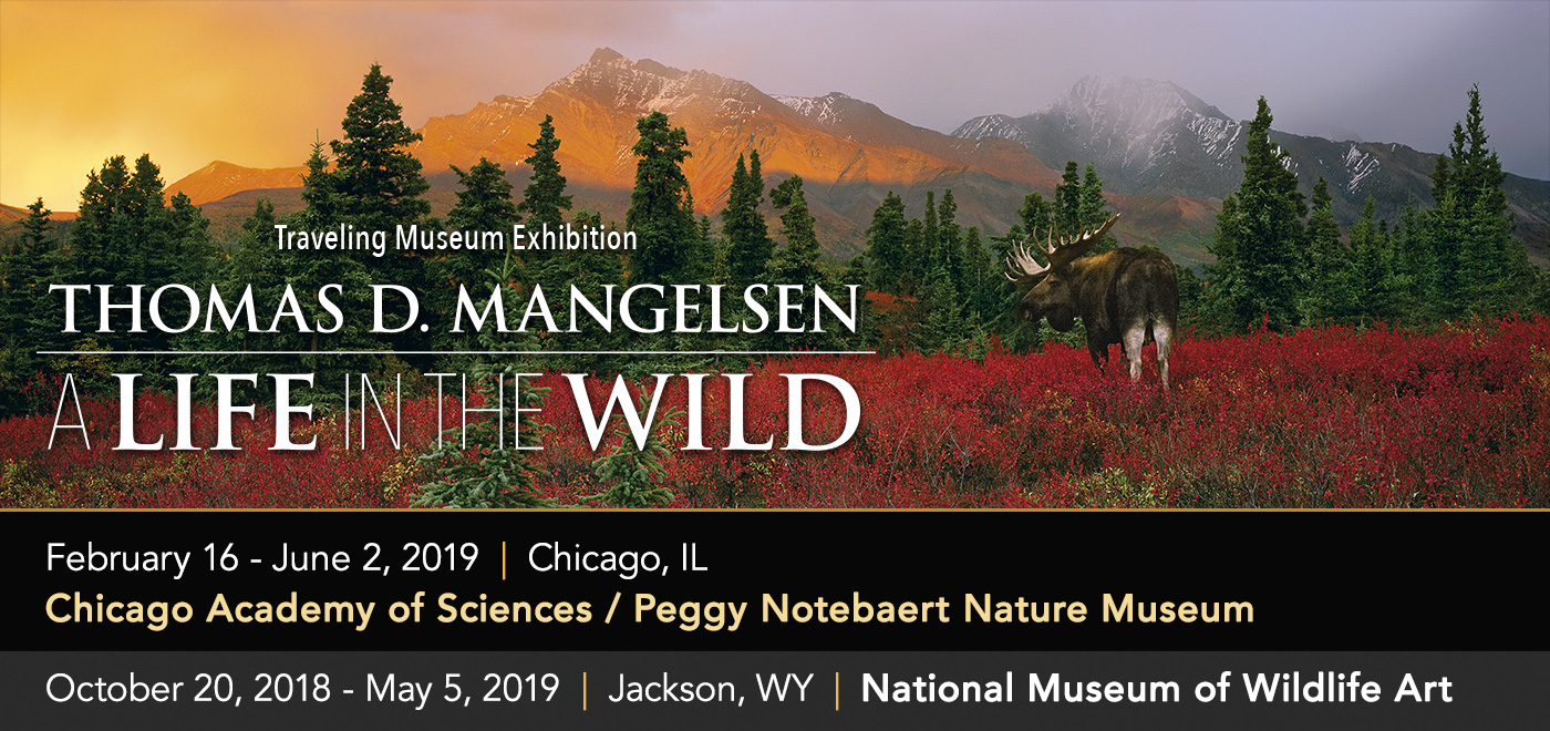 Thomas D. Mangelsen: A Life in the Wild traveling museum exhibitionis now in Chicago, IL