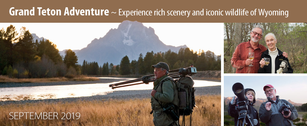Experience rich scenery and iconic wildlife of Wyoming on this Grand Teton Adventure in September 2019.