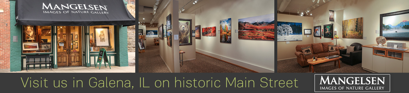 Visit the Mangelsen Images of Nature Gallery in Galena, Illinois.