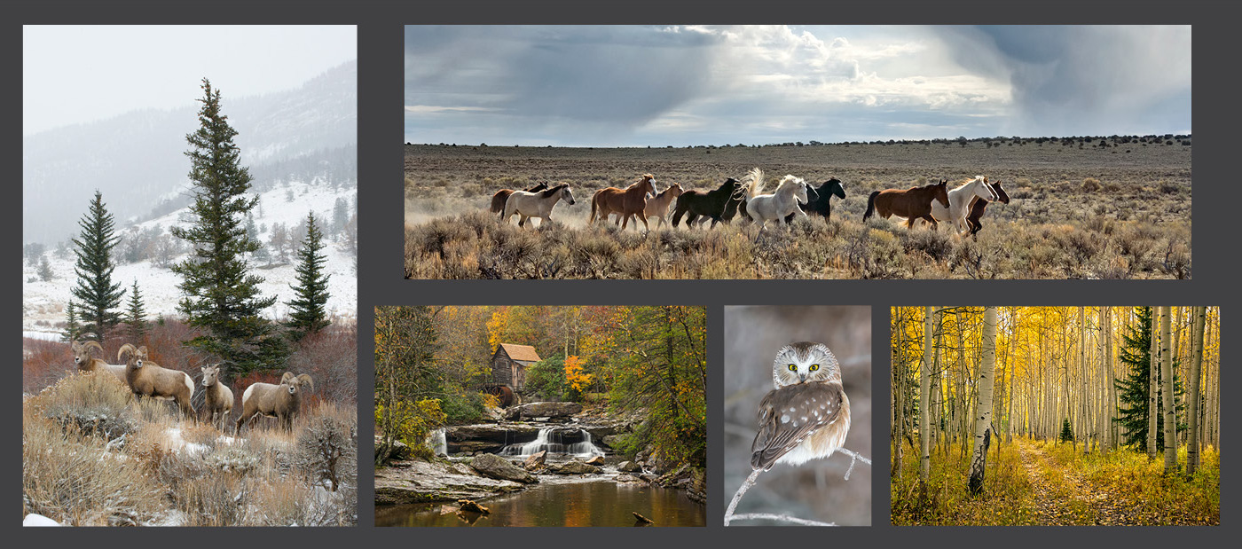 Offer is only available at our Mangelsen Images of Nature Gallery located in Denver (Cherry Creek North).