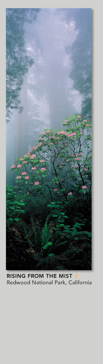Limited Edition titled Rising from the Mist
