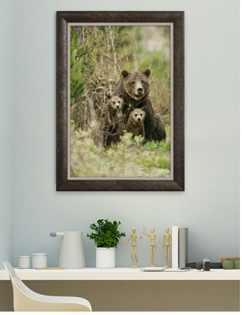Any human mother can relate to the love and tenderness Grizzly 399 brings to caring for her broods over the years.