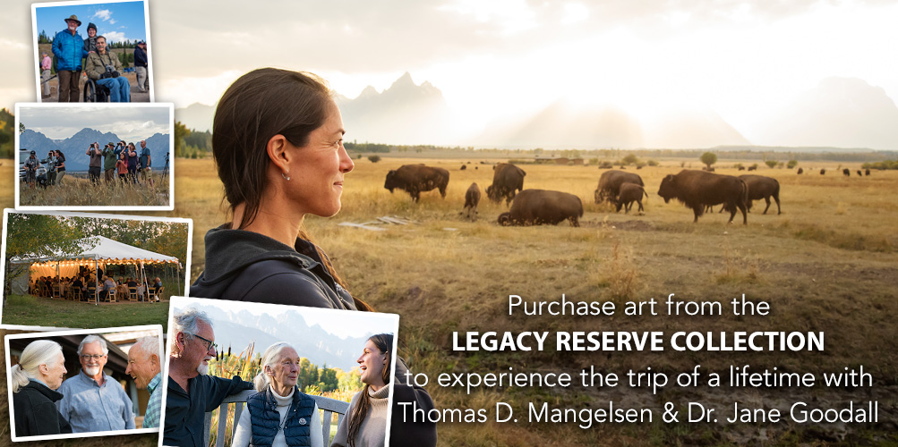 Purchase art from the Legacy Reserve Collection to experience the trip of a lifetime with Thomas D. Mangelsen.