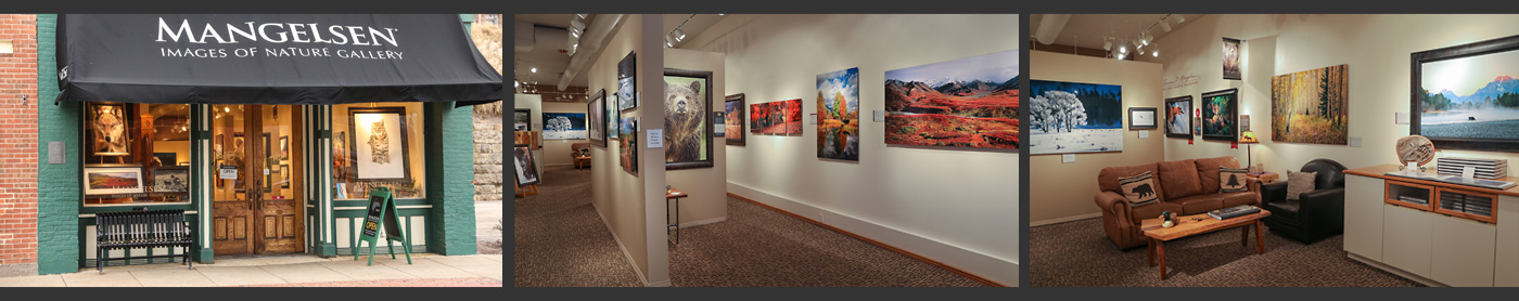 Visit a Mangelsen Images of Nature Gallery.