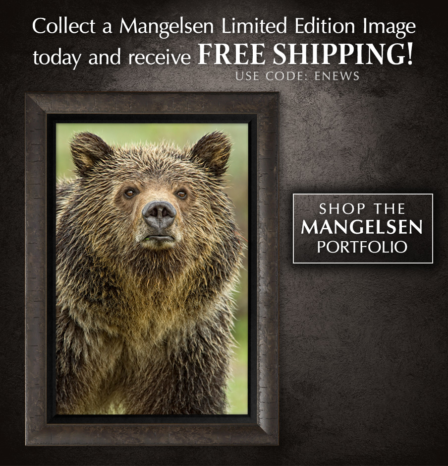 Browse the Mangelsen Portfolio and add a limited edition image to your art collection.