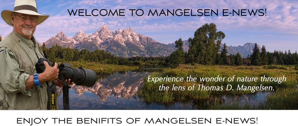 Welcome to Mangelsen e-news!