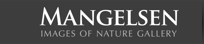 Mangelsen - Images of Nature Gallery